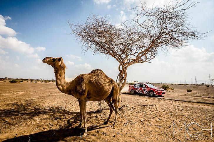2015 Dubai International Rally-17