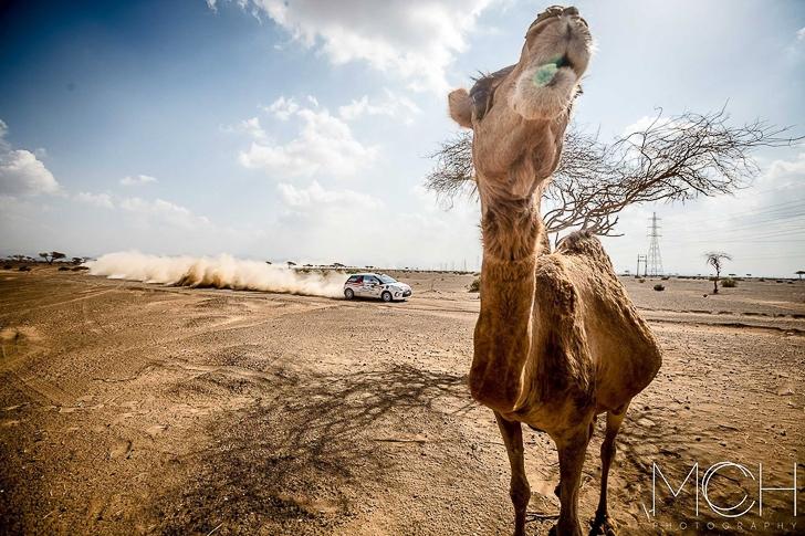 2015 Dubai International Rally-4