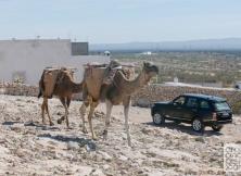 range-rover-launch-morocco-005